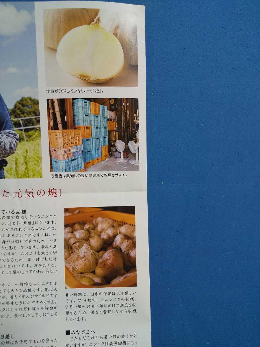 即購入可能 送料込 令和元年産 愛媛県産乾燥にんにく にんにくチップ 50g_画像5
