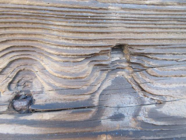 【湖華】古材/検)舟板茶道具煎茶結界盆栽看板建材店舗古民家カフェ20323F15_画像8