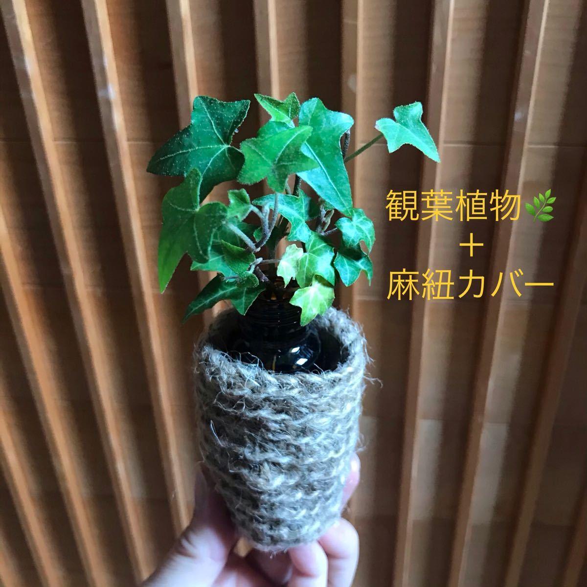 観葉植物+麻紐カバー+瓶 アイビー ヘデラ緑単色 リアルグリーン 癒し