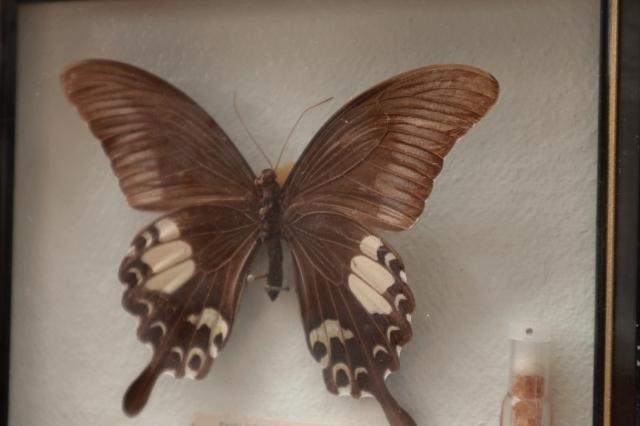 ◆ アメリカ雑貨 アゲハチョウ 昆虫標本 壁掛けオブジェ ウォールデコ/ビンテージ アンティーク レトロ インテリア アート 蝶々 額装_画像4