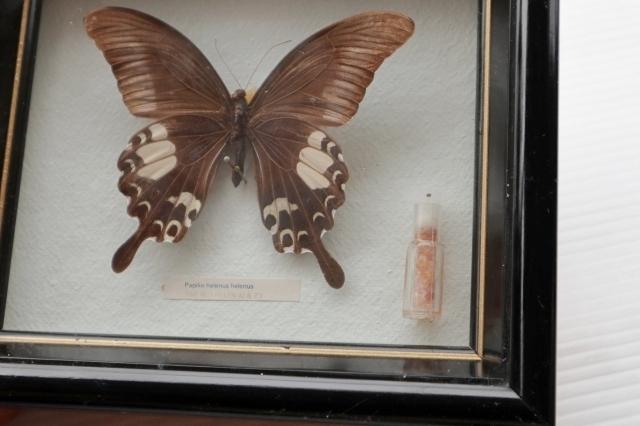 ◆ アメリカ雑貨 アゲハチョウ 昆虫標本 壁掛けオブジェ ウォールデコ/ビンテージ アンティーク レトロ インテリア アート 蝶々 額装_画像3