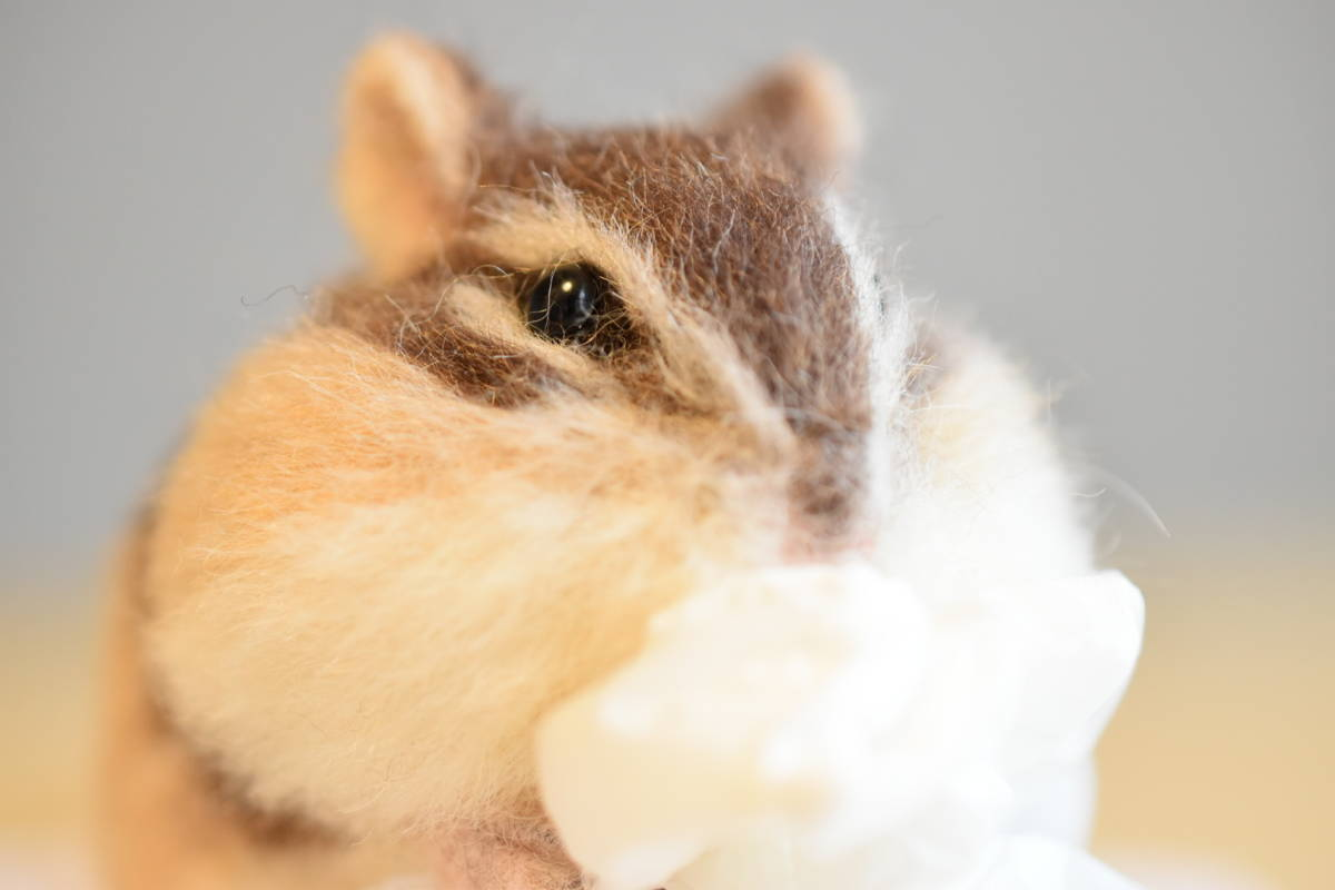 買い占め、やめよう●sweet cocoa ハンドメイド 羊毛フェルト●シマリス/リス/ティッシュペーパー/リアルサイズ_そのパンパンの頬袋が動かぬ証拠です!