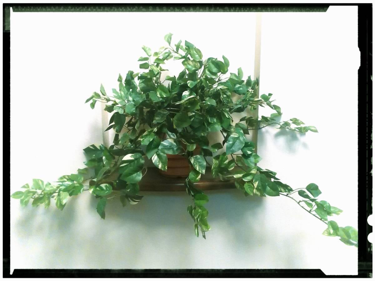 花器付観葉植物 インテリアグリーンB80