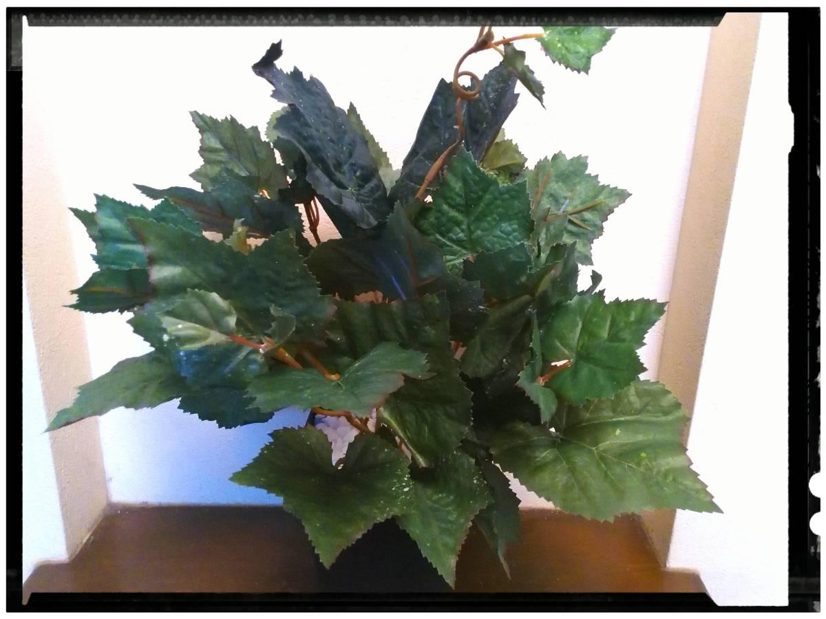 送料無料!花器付観葉植物 インテリアグリーンB83
