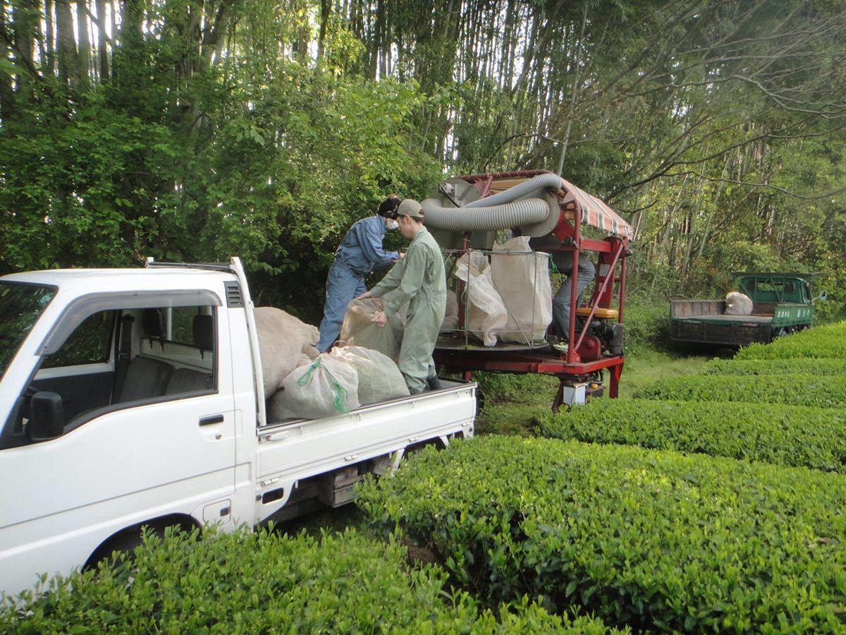あさぎり誉100g1袋あさぎりほうじ茶90g1袋 新茶 生産者直売 無農薬無化学肥料栽培 カテキンパワー 免疫力アップ シングルオリジン_画像7