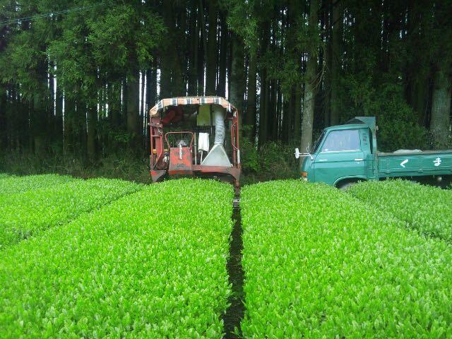 あさぎり誉100g1袋あさぎりほうじ茶90g1袋 新茶 生産者直売 無農薬無化学肥料栽培 カテキンパワー 免疫力アップ シングルオリジン_画像3