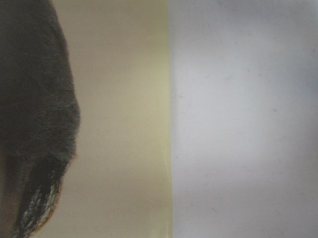 [200625193] 沢田研二 A面 憎み切れないろくでなし B面 俺とお前 ポリドール株式会社 1977年発売 作詞 阿久悠 EPレコード 【中古】_画像9