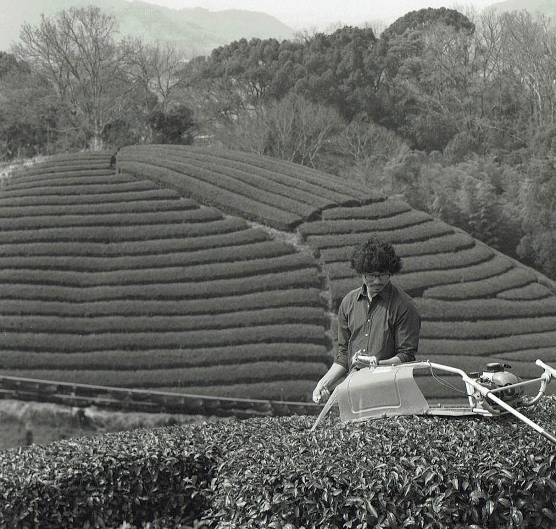 ほうじ茶(30g)農薬・肥料不使用 加茂自然農園のお茶 送料120円_画像6