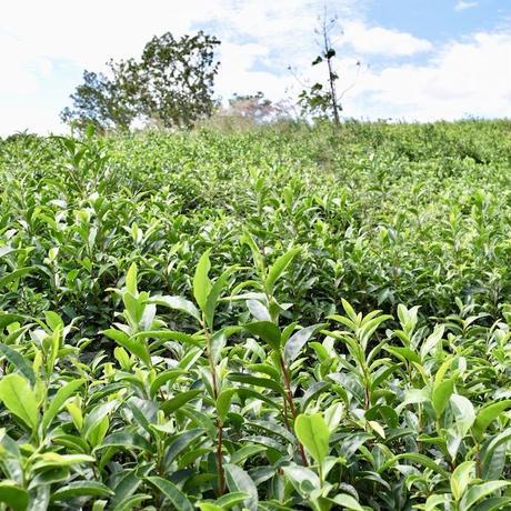 ほうじ茶(30g)農薬・肥料不使用 加茂自然農園のお茶 送料120円_画像5