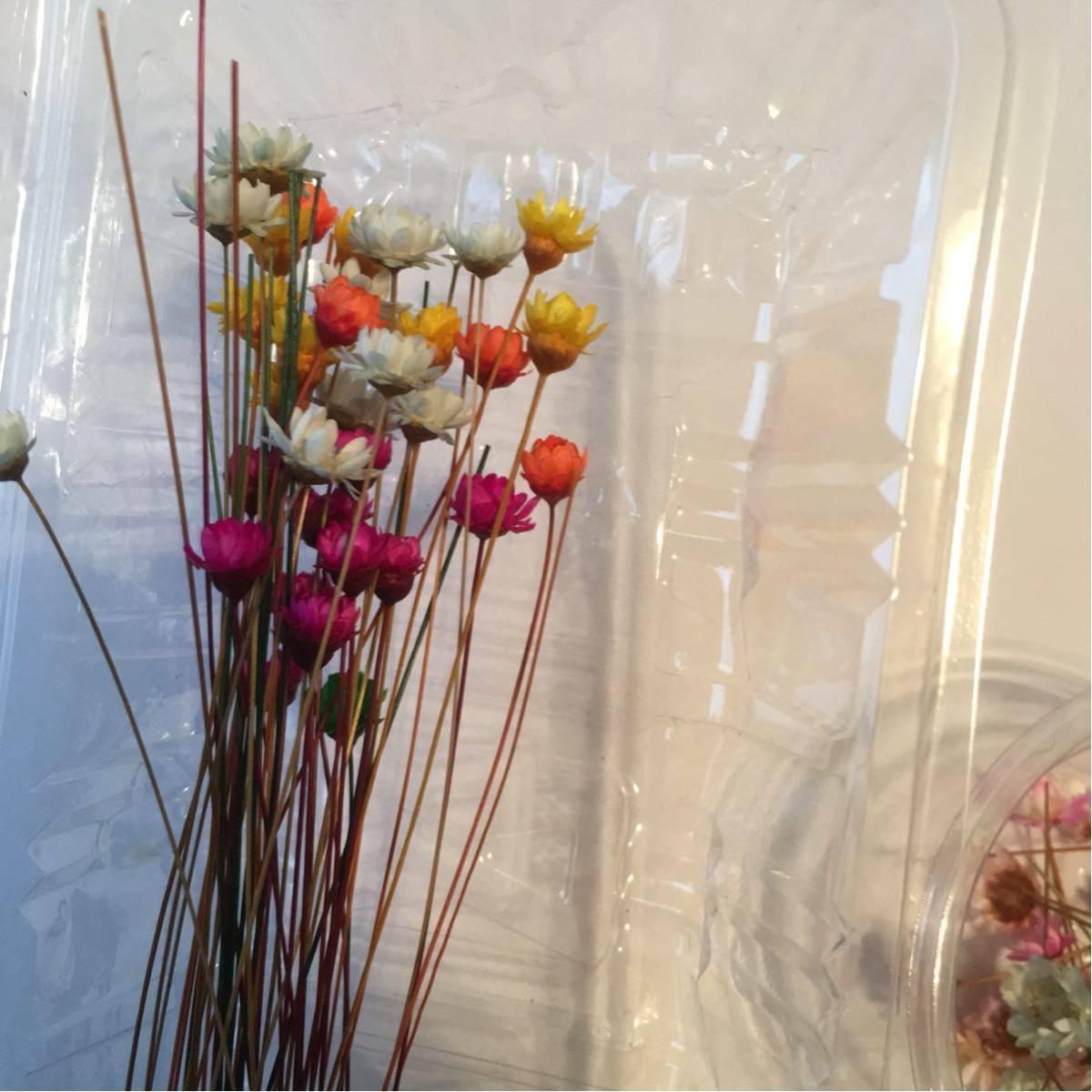 スターフラワー ドライフラワー ハーバリウム花材 画像のものハーバリウム_画像4