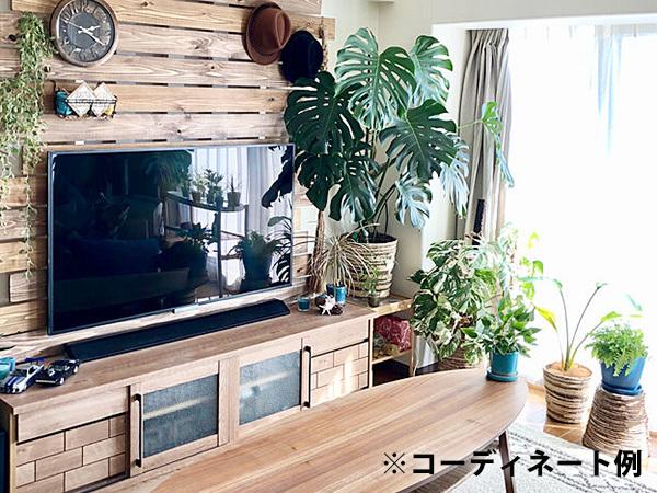 モンステラ 約100cm 7号 観葉植物 ハワイアン 新築祝い 開店祝い 鉢植え おしゃれ カリフォルニア 西海岸風 インテリア アメリカン雑貨_画像2
