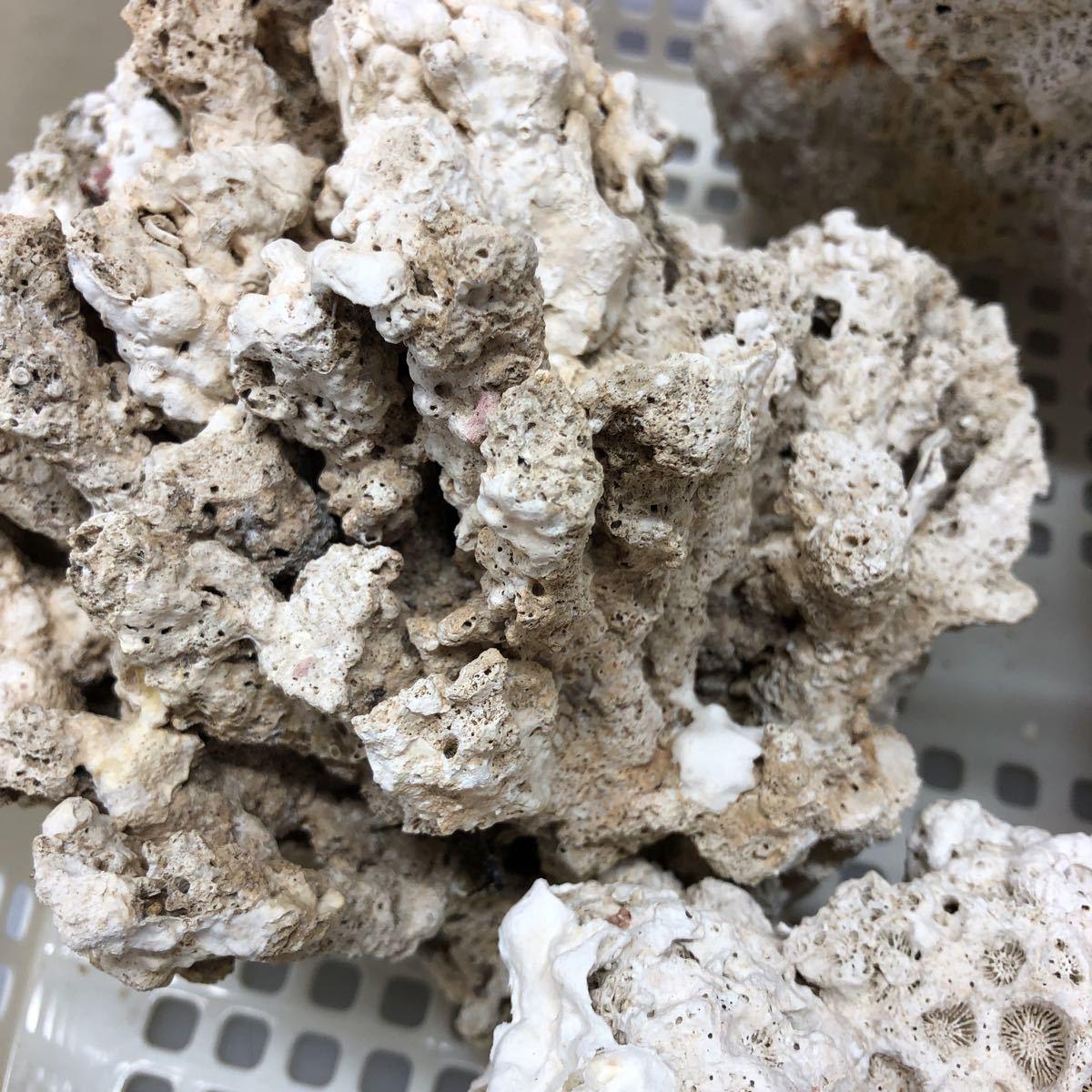 土台珊瑚 3,9キロ 天然_画像2