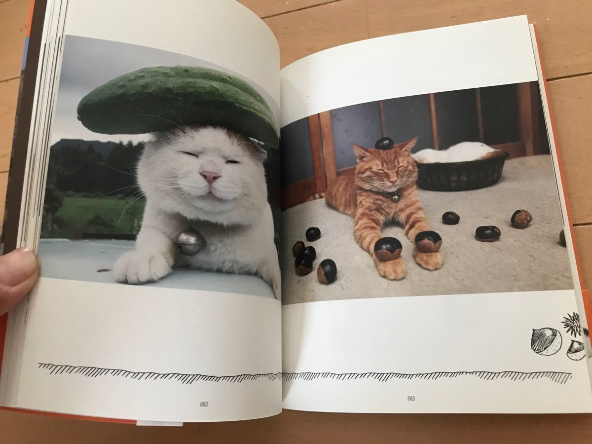 のせ猫  宝島社