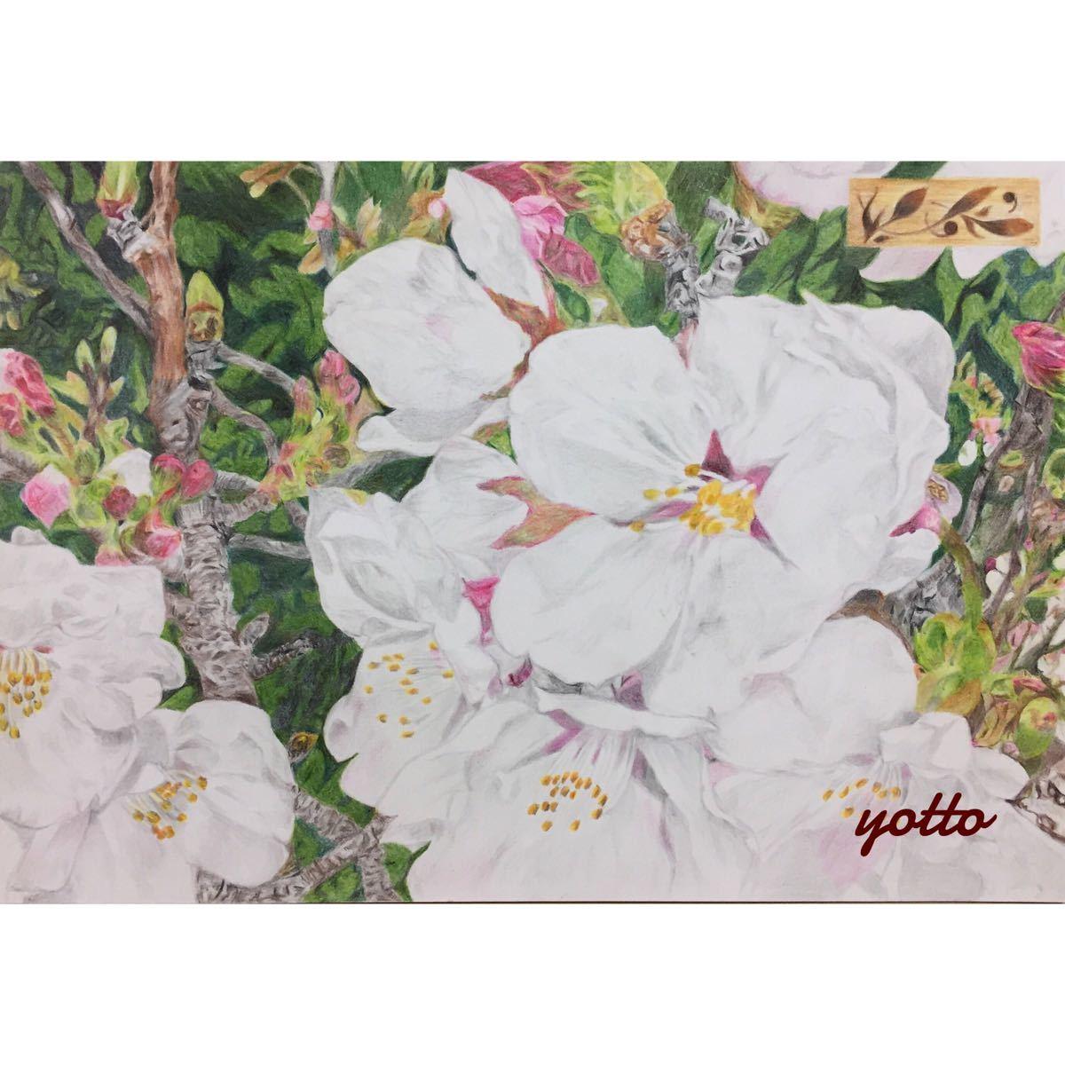 色鉛筆画「 いつか、また… 」A4・額付き◇◆手描き◇原画◆桜・花・風景画◆yotto_画像1