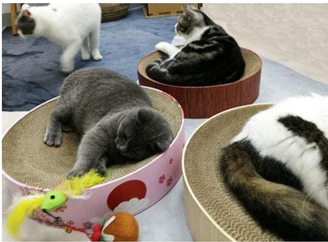 猫の爪研ぎボードベッド2点セット新品未開封