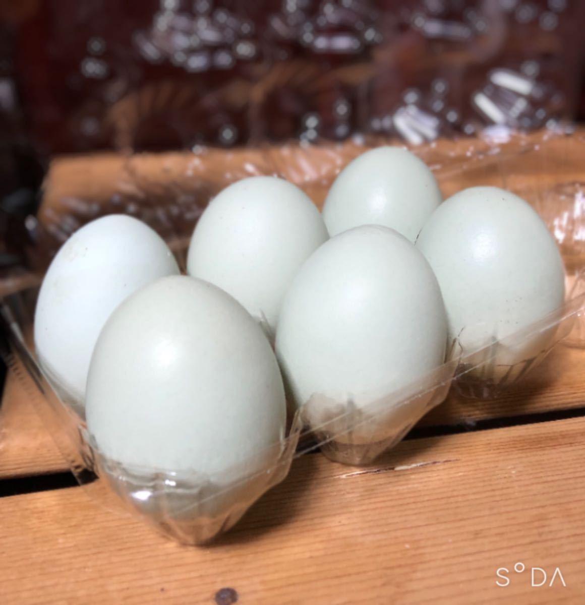 【有精卵 3個】鶏 青い卵_画像4