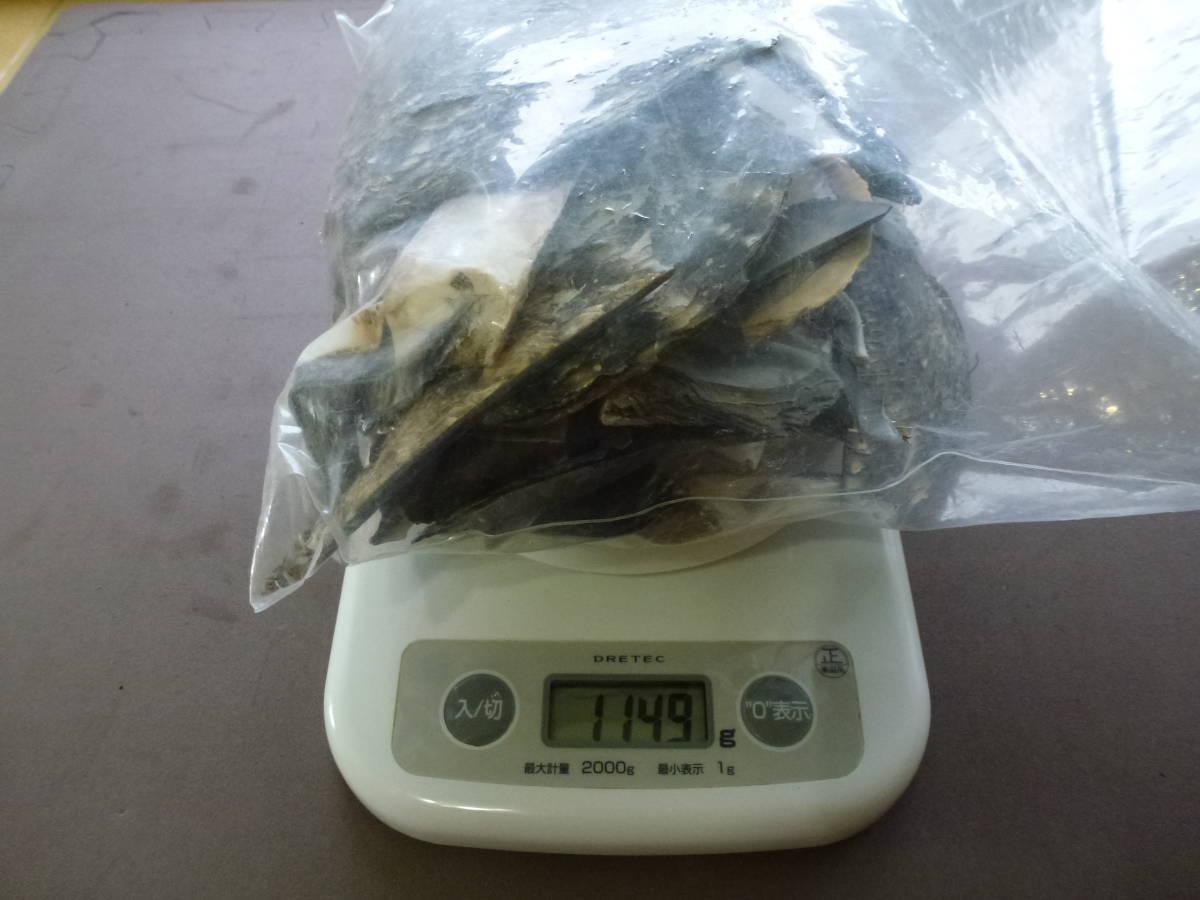 黒蝶貝 貝殻 端材 パーツ アクセサリー 手芸 工作 細工 ホビー 材料 素材 DIY 約1.1kg_画像7