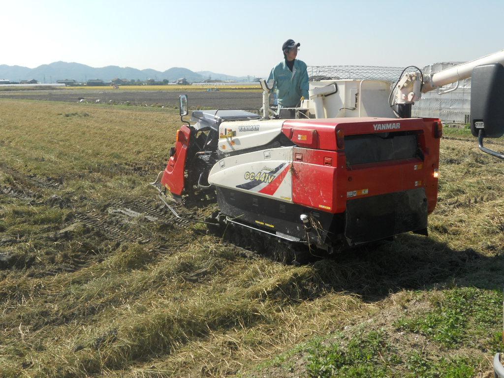 令和元年度 ひのひかり 白米10㎏ 純米 もちもち 生産者より直送_画像4