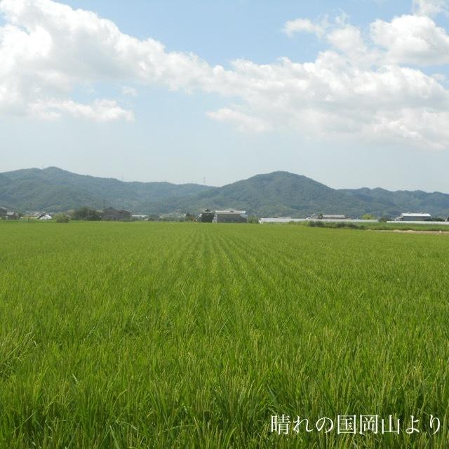 令和元年度 ひのひかり 玄米10㎏×2袋 もちもち 生産者直送_画像6