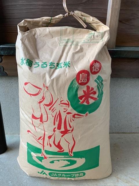 1円スタート 米 令和元年産 徳島県産コシヒカリ 玄米25㌔