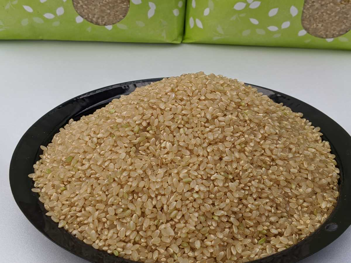令和2年コシヒカリ 福井県産玄米10kg_画像2