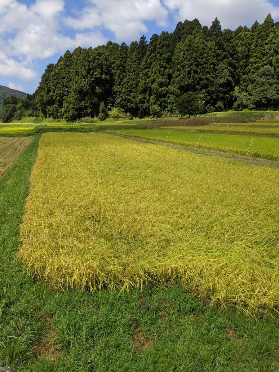 令和2年コシヒカリ 福井県産玄米10kg_画像5