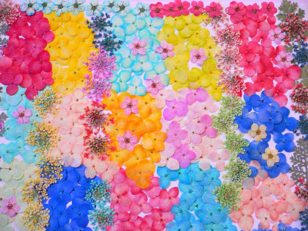 (^◇^) 押し花素材・カラフルなお花 ♪ s21 _画像1
