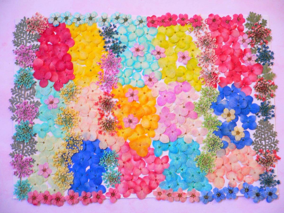 (^◇^) 押し花素材・カラフルなお花 ♪ s21 _画像2