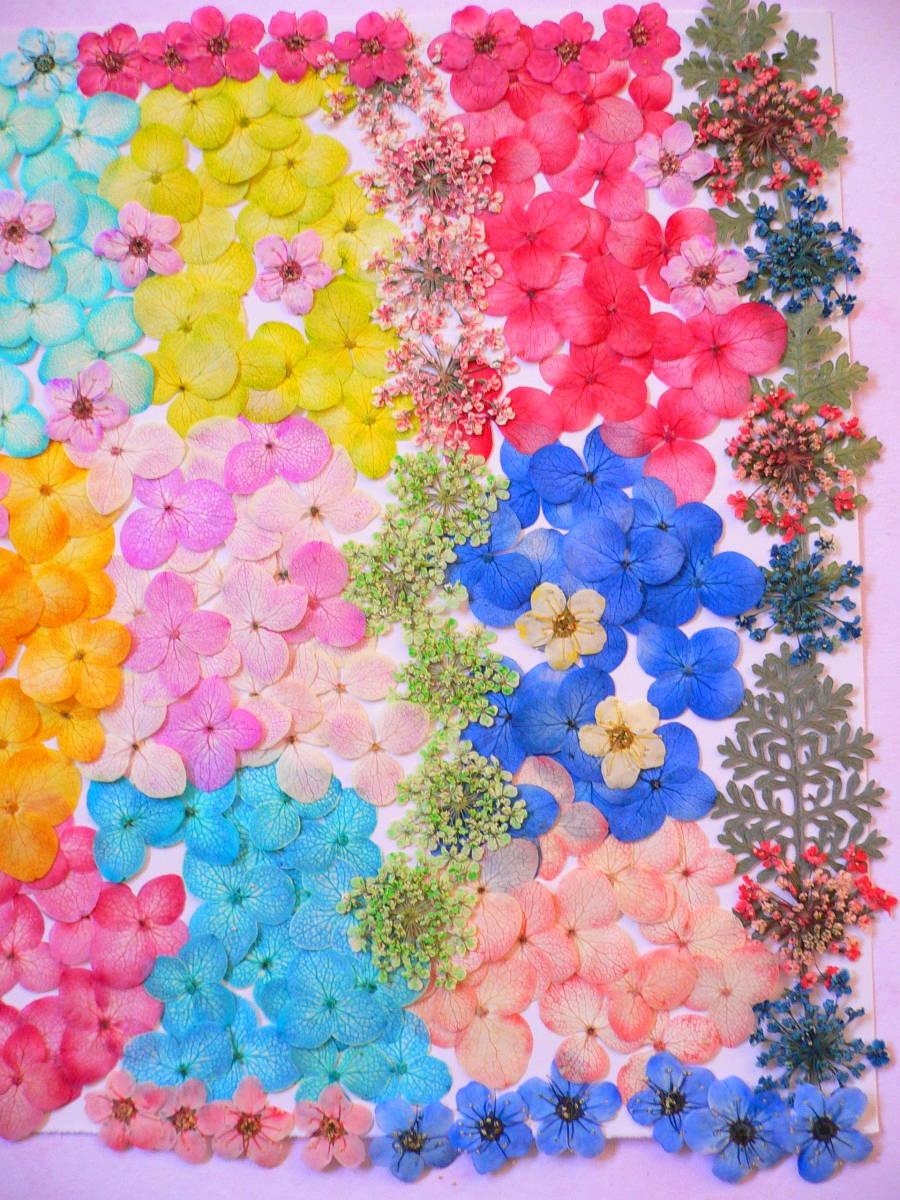 (^◇^) 押し花素材・カラフルなお花 ♪ s21 _画像3