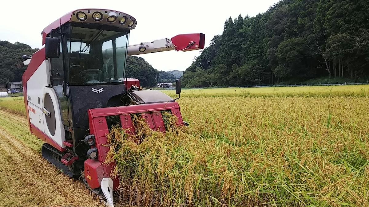 令和元年産 いのちの壱30kg玄米 減農薬減化学肥料 食味スコアSランク_画像2