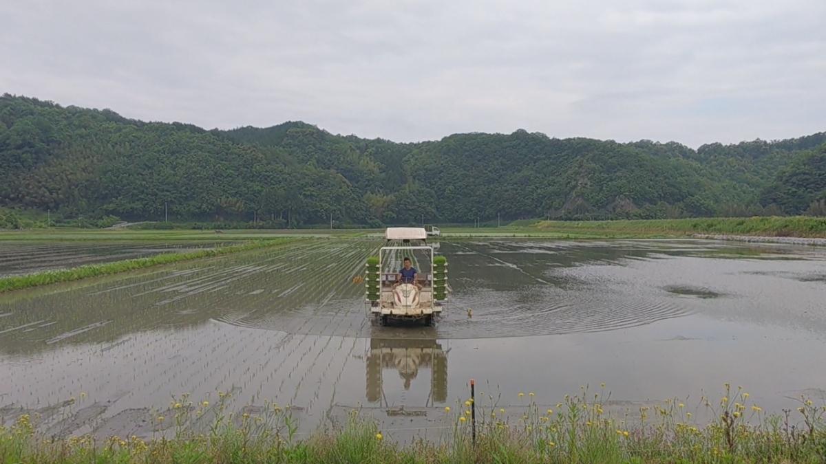 令和元年産 いのちの壱30kg玄米 減農薬減化学肥料 食味スコアSランク_画像5
