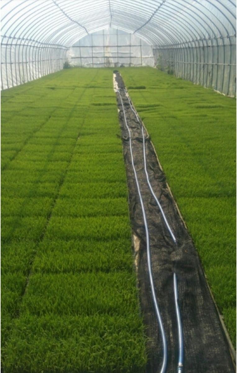 令和元年産 いのちの壱30kg玄米 減農薬減化学肥料 食味スコアSランク_画像3