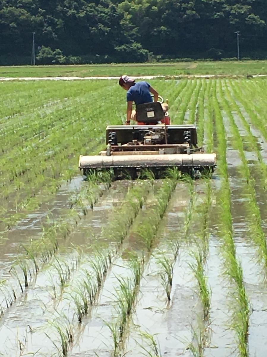 令和元年産 いのちの壱30kg玄米 減農薬減化学肥料 食味スコアSランク_画像4