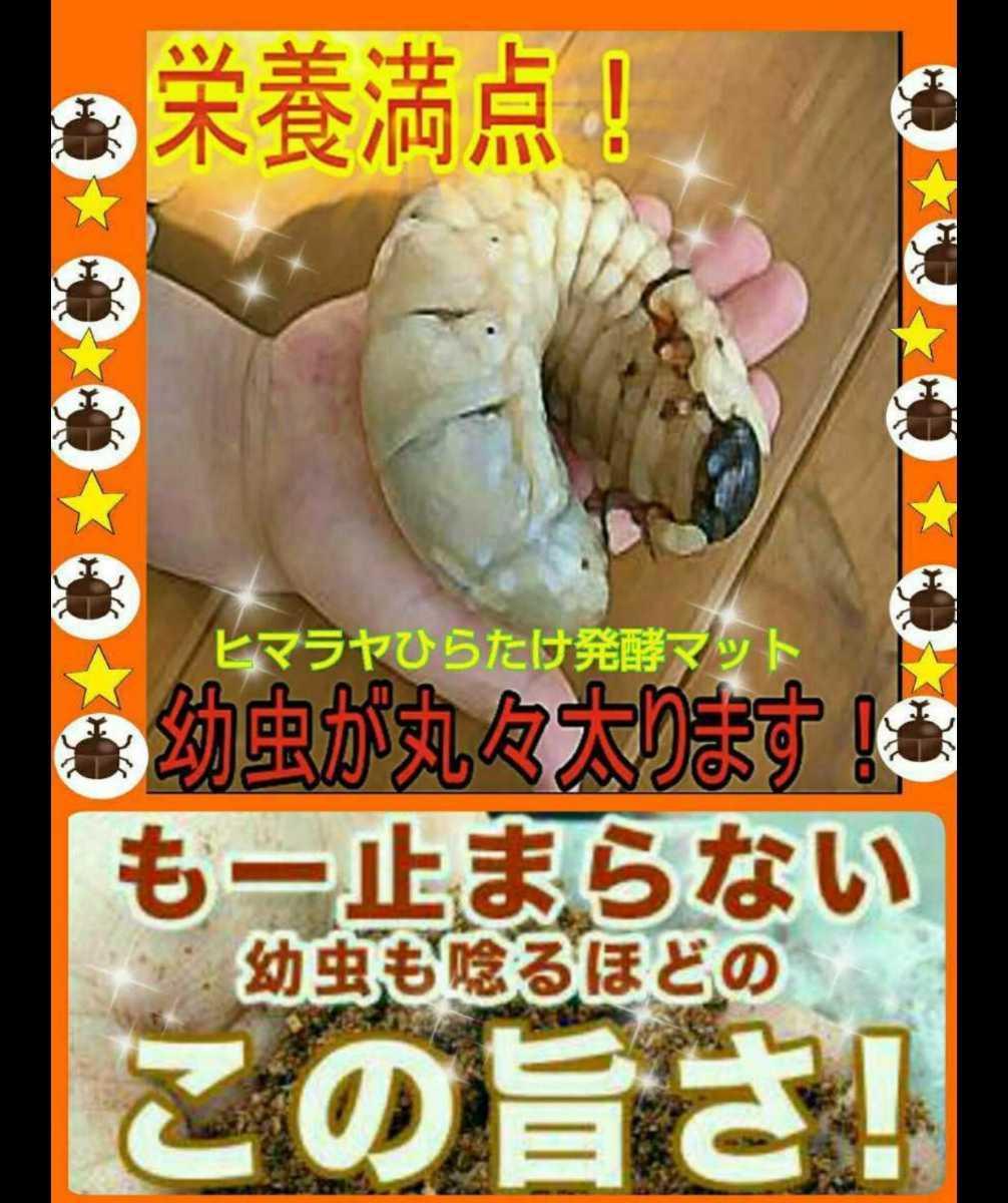最高峰!ヒマラヤひらたけ菌床発酵カブトムシマット☆抜群の栄養価で幼虫が巨大化!産卵マットにも抜群!クヌギ100%原料 クワガタにも!_画像6