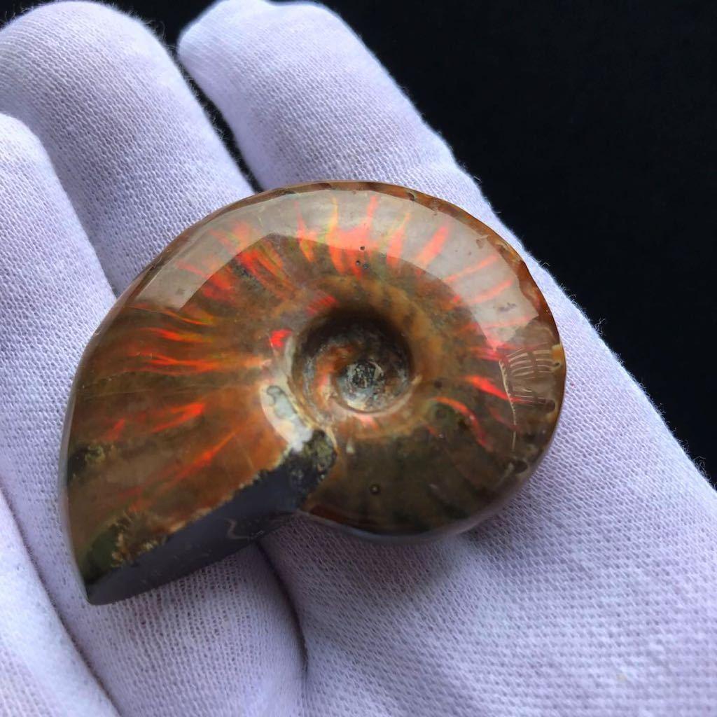 綺麗なオパール化 アンモナイト化石 40g 多彩な発色が特徴的な虹色の遊色 マダガスカル産 ピカピカ磨き