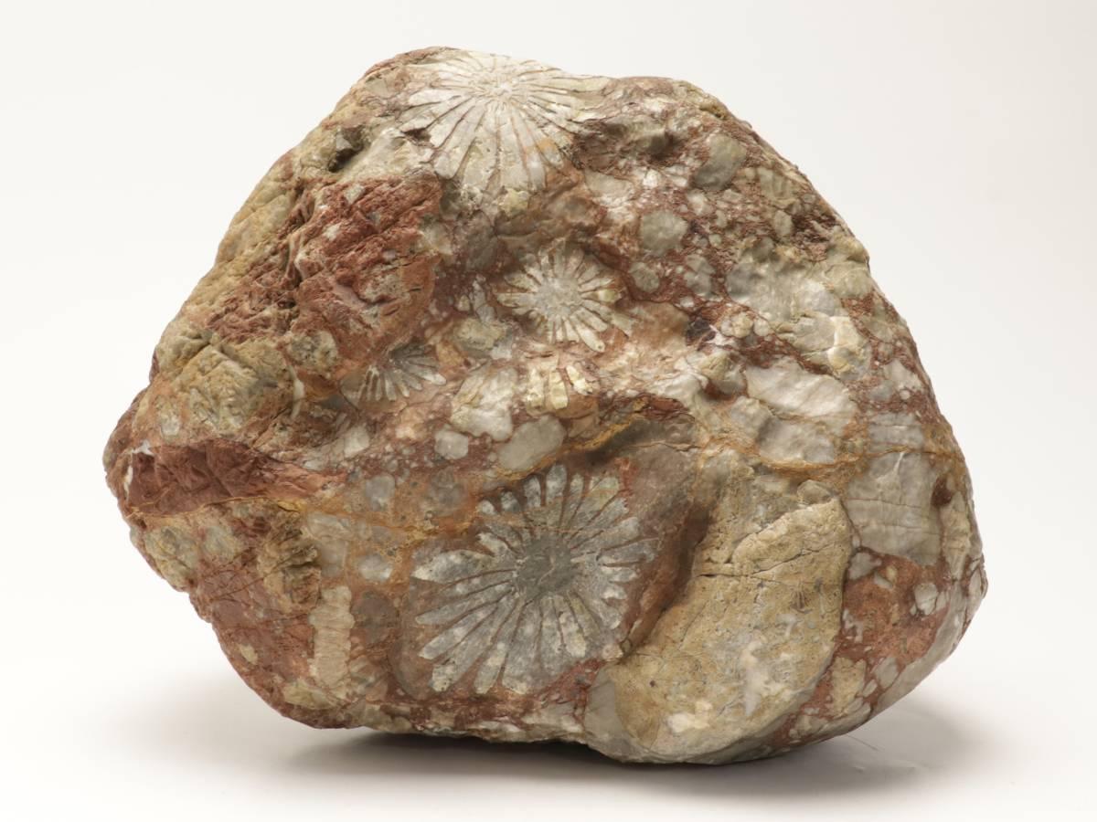 【蔵】鑑賞石 菊花石 重さ約9キロ 天然石 鑑賞石 飾り石 S202_画像2