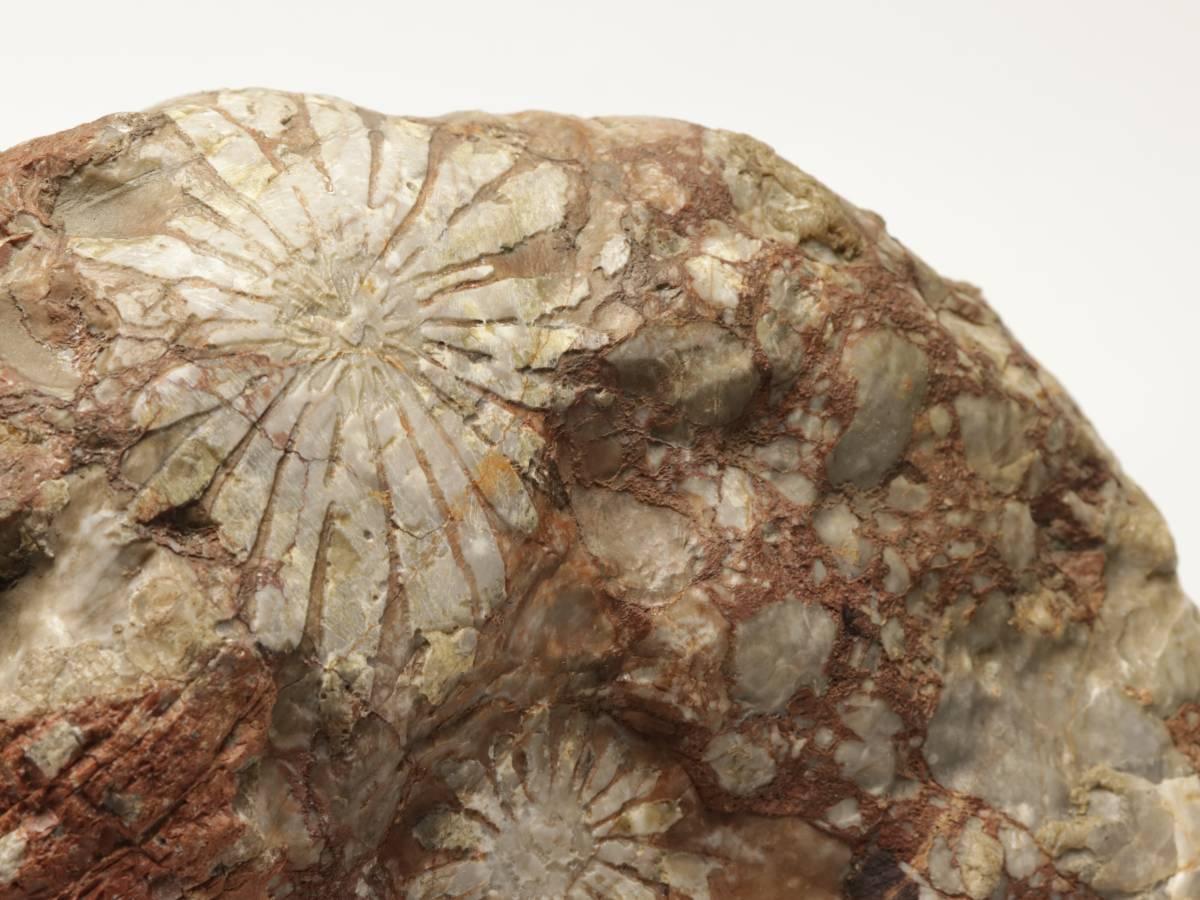【蔵】鑑賞石 菊花石 重さ約9キロ 天然石 鑑賞石 飾り石 S202_画像8