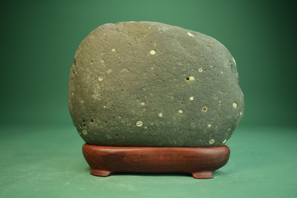 利根川産 白梅花石 (盆景 水石 鑑賞石 飾り石)ID5072_画像3