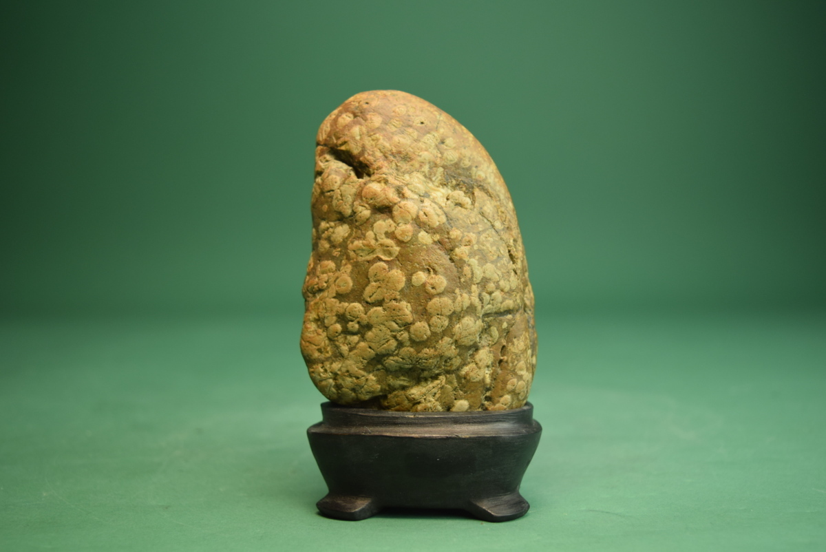 梅花石(盆景 水石 鑑賞石 飾り石)ID5096_画像1