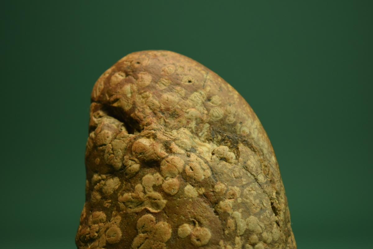 梅花石(盆景 水石 鑑賞石 飾り石)ID5096_画像7
