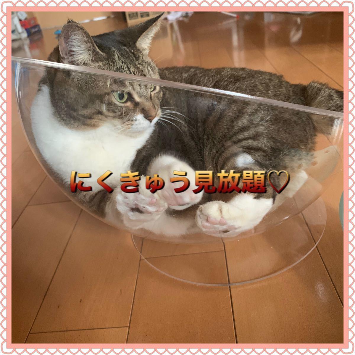 猫のおもちゃ 猫じゃらし 可愛いにくきゅう見放題! クリアボウルベッド