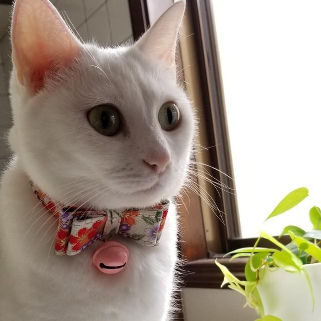 新品送料無料☆リボン和モダン首輪☆セーフティーリード☆猫☆小型犬
