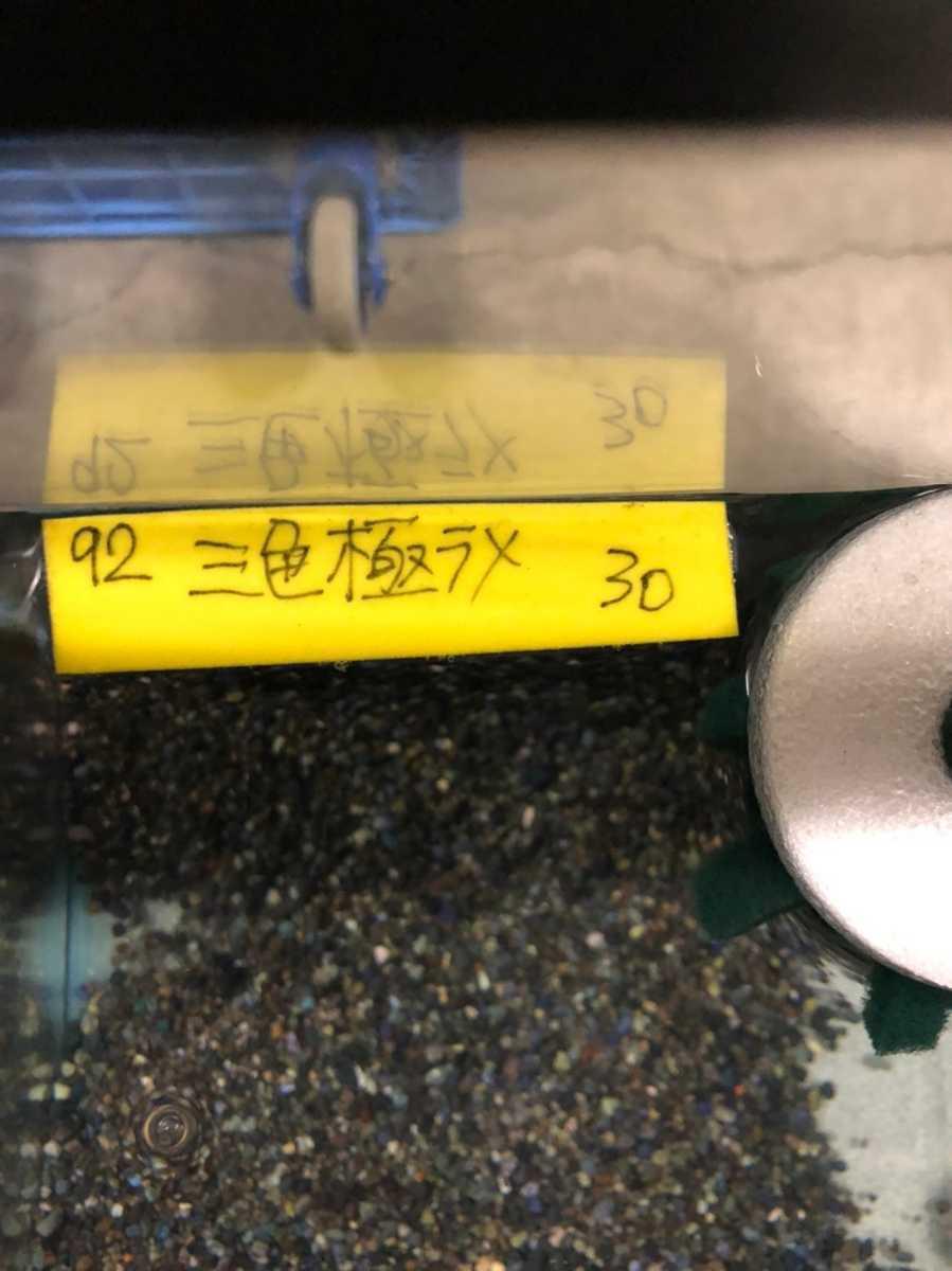 現物 三色極ラメ メダカ 現物 4匹セット( 雌2 雌2 ) 購入個体 めだか 1031_画像7