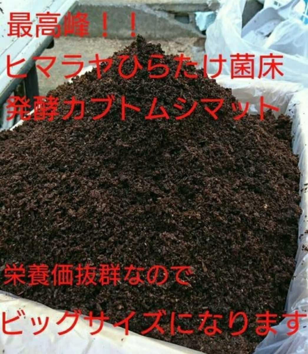 幼虫がビッグサイズになります!ヒマラヤひらたけ菌床発酵マット!栄養価抜群!クヌギ100%原料 幼虫の餌、産卵マットにも抜群の実績あり!_画像1