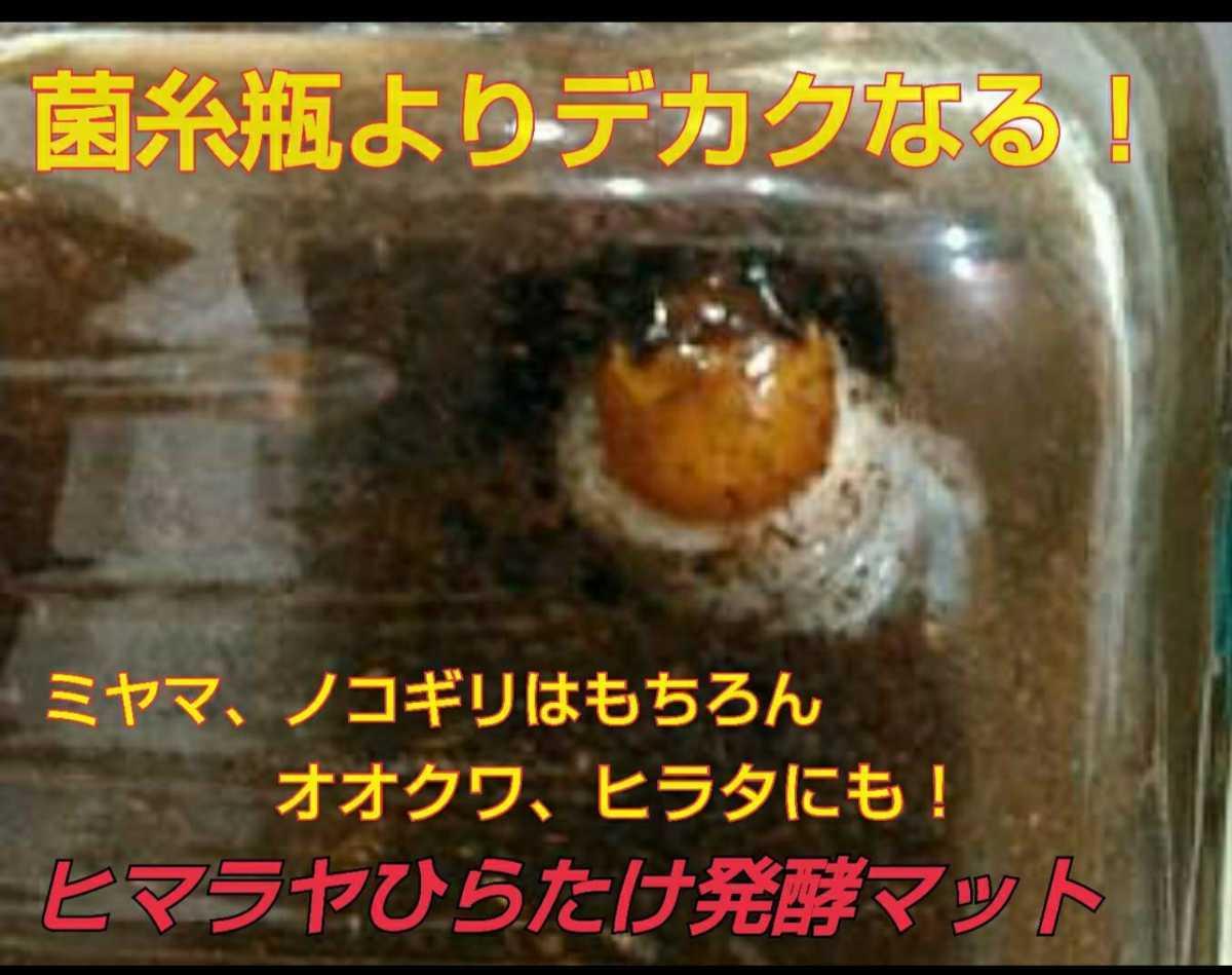 ミヤマクワガタやノコギリクワガタがビックサイズになります!ヒマラヤひらたけ発酵マット!栄養価抜群! 幼虫の餌、産卵マットにも最高!_画像6