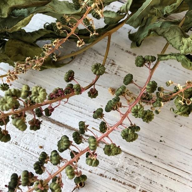 ヨウシュヤマゴボウの実付き枝 3本セット ドライフラワー花材 リース スワッグ そのままインテリアなどに 星月猫_画像2