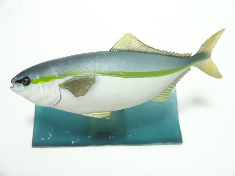 ブリ 原色海水魚図鑑II_画像1