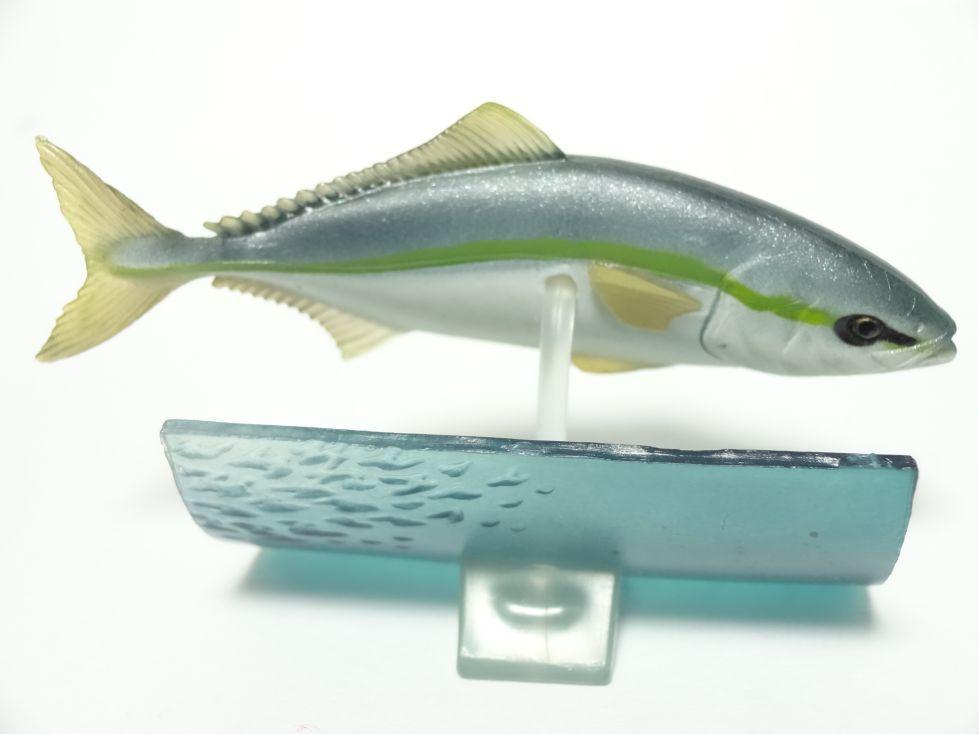 ブリ 原色海水魚図鑑II_画像2