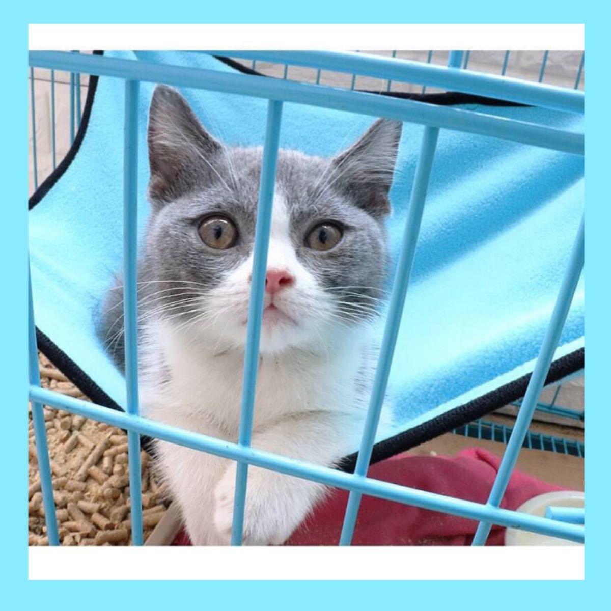 猫ちゃんハンモック フリース ブルー 取り付け簡単