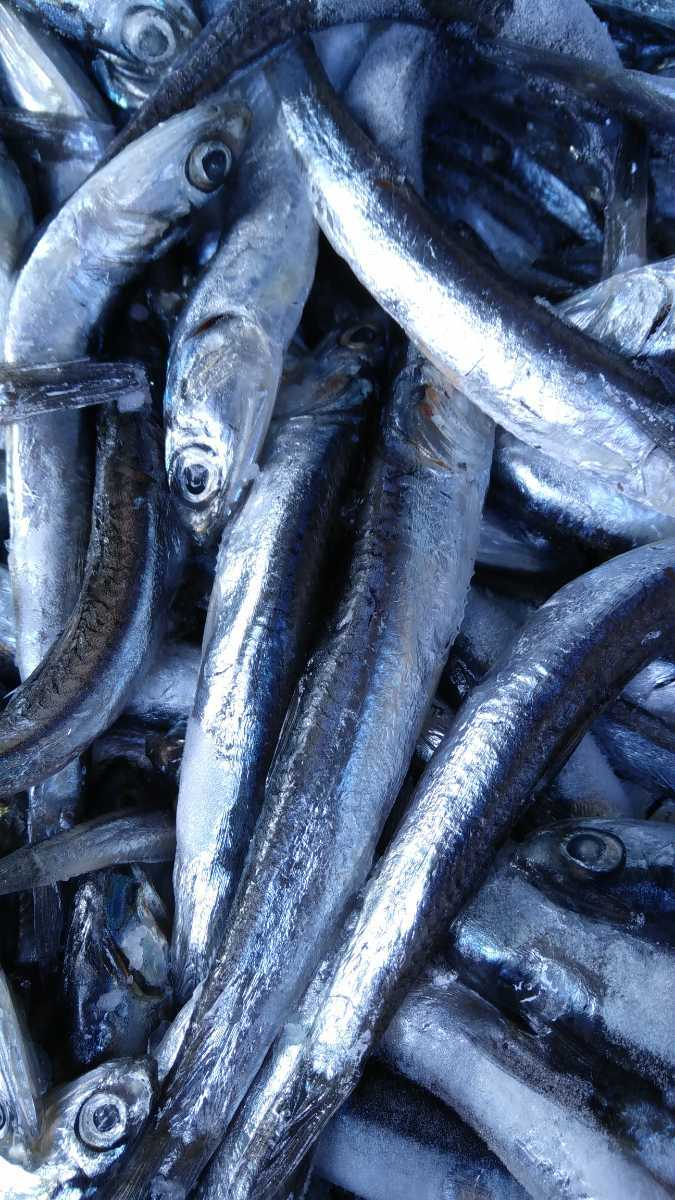 (魚)セグロイワシ「しこいわし」150g240円即決_画像1